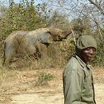 planet-ride-voyage-burkina-faso-moto-elephant-homme-bobo-dioulasso