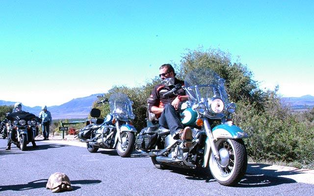 planet-ride-voyage-afrique-du-sud-moto-harley-davidson-tortue-route