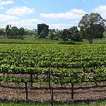 circuit en australie en camping car vignobles