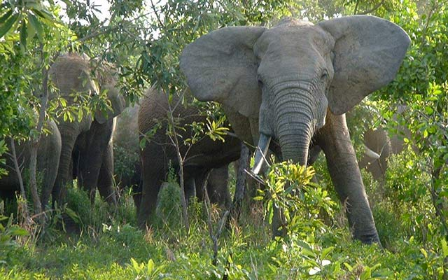 planet-ride-voyage-burkina-faso-mobylette-elephants