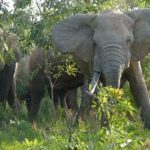 planet-ride-voyage-burkina-faso-mobylette-elephants