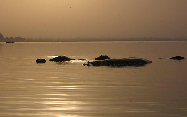 planet-ride-voyage-burkina-faso-mobylette-hippopotames-lac