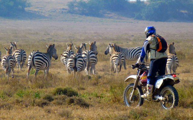 planet-ride-voyage-kenya-moto-zebres-motard-savane