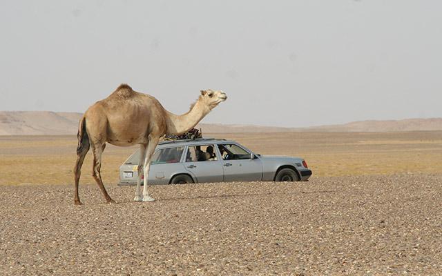 planet-ride-voyage-mauritanie-4x4-desert-dromadaire