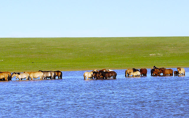 planet-ride-voyage-mongolie-4x4-chevaux-lac-steppe-herbe