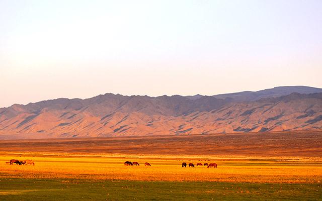 planet-ride-voyage-mongolie-montagne-steppe-troupeau