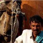 planet ride voyage moto inde rajasthan chameau pushkar