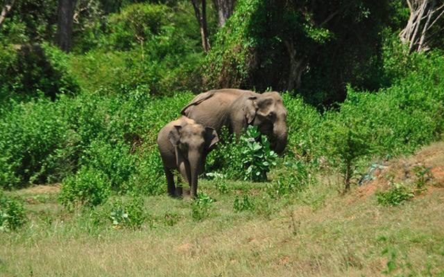 Élephants du Parc National de Yala, lors de votre voyage au Sri Lanka à moto avec Planet Ride et Ophélie