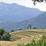 planet-ride-voyage-moto-sri-lanka-rizieres-montagnes