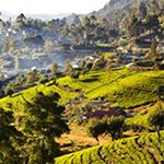 planet-ride-voyage-sri-lanka-moto-paysage-culture-the-montagne