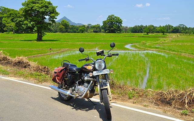 Au bord des rizières, lors de votre voyage au Sri Lanka à moto avec Planet Ride et Ophélie