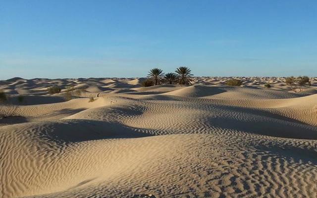 planet-ride-voyage-tunisie-buggy-desert-saharah-sable-palmier