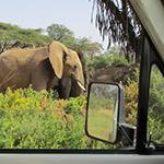Éléphant de la réserve Samburu, 4x4 kenya