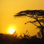 Couché de soleil à Suswa, safari au kenya