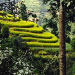 Cultures à flanc de montagne lors d'un voyage au Népal à moto avec Planet Ride