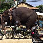Motos et éléphant d'Asie lors d'un voyage au Népal à moto avec Planet Ride