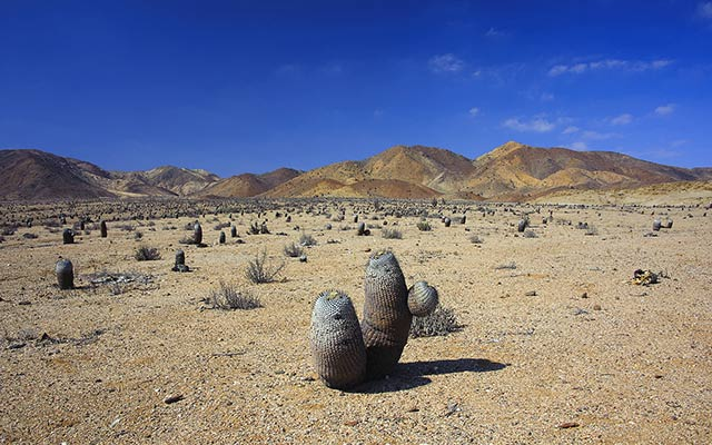 planet-ride-voyage-chili-buggy-course-atacama-desert-cacturs-montagnes