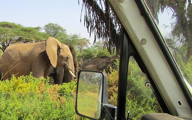 Éléphant de la réserve Samburu, lors de votre voyage au Kenya en 4x4 avec Planet Ride