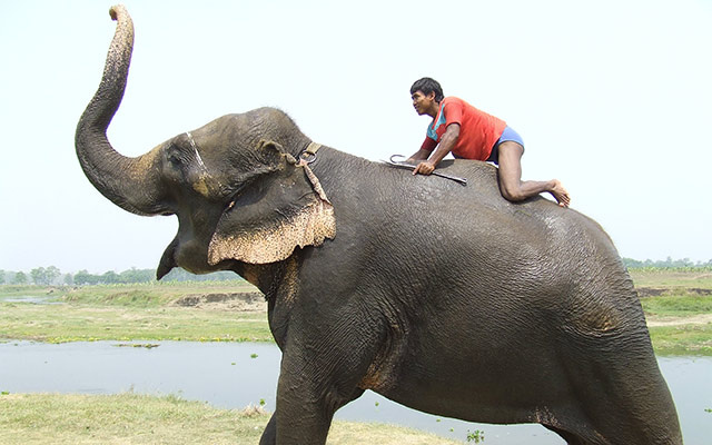 népalais à dos d'éléphant d'Asie lors d'un voyage au Népal à moto avec Planet Ride