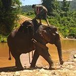 Éléphant dans la vallée, lors de votre voyage au Laos à moto avec Planet Ride et Charly