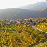 Vignobles de la Valpolicella, lors de votre voyage en Italie en Vespa avec Planet Ride et Roberta
