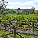camping car en australie aux Vignobles de la Clare Valley