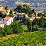 Dans les vignes, lors de votre voyage en Italien en Fiat 500 avec Planet Ride et Roberta