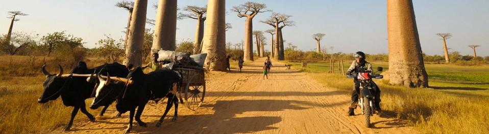 Sur l'allée des baobabs, lors de votre voyage à Madagascar à moto avec Planet Ride et Jean