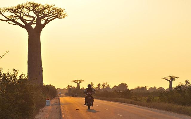 Baobab sur la route, lors de votre voyage à Madagascar à moto avec Planet Ride et Jean