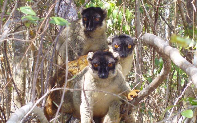 Lémuriens, lors de votre voyage à Madagascar à moto avec Planet Ride et Jean