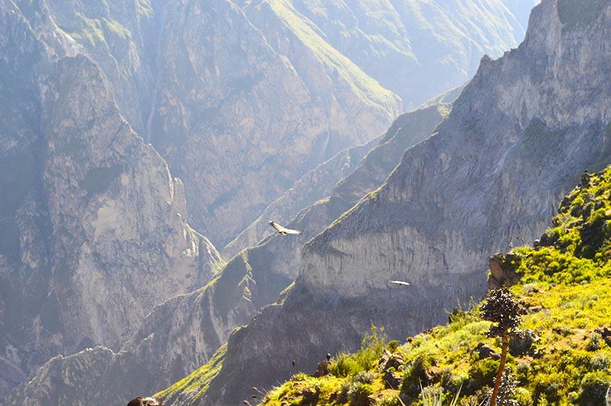 Au Canyon du Colca, en voyage 4x4 au Pérou avec Laurent et Planet Ride