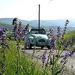 votre coccinelle sur les routes de provence lors de votre voyage avec Planet Ride France