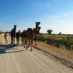 voyage-moto-inde-planet-ride-route