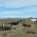 Voyage moto en Patagonie avec Planet Ride cheveaux