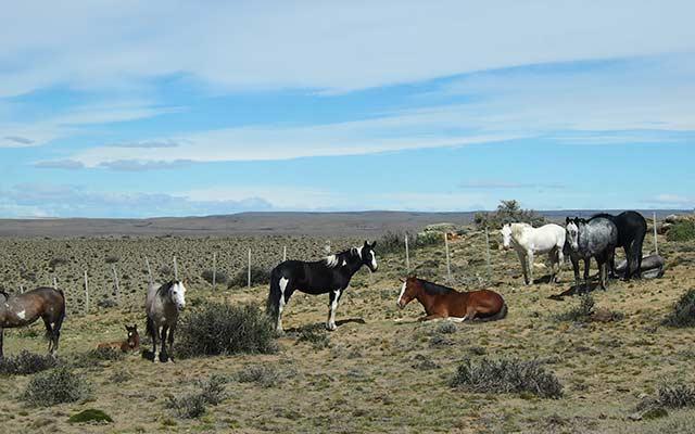 voyage-planet-ride-patagonie-moto-cheveaux