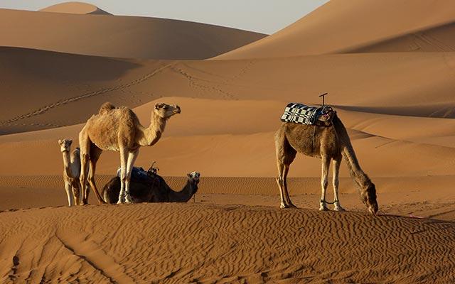 planet ride voyage au maroc en camping-car