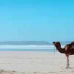 planet ride voyage au maroc en camping-car plage camel
