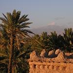 planet ride voyage au maroc en camping-car palmier