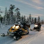 forêt de Laponie en motoneige avec Planet Ride