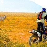 Rencontre avec la faune lors de voyage a moto enduro avec fred au Kenya Planet Ride