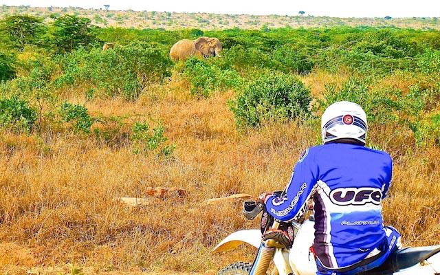 Rencontre des éléphants lors de voyage a moto enduro avec fred au Kenya Planet Ride