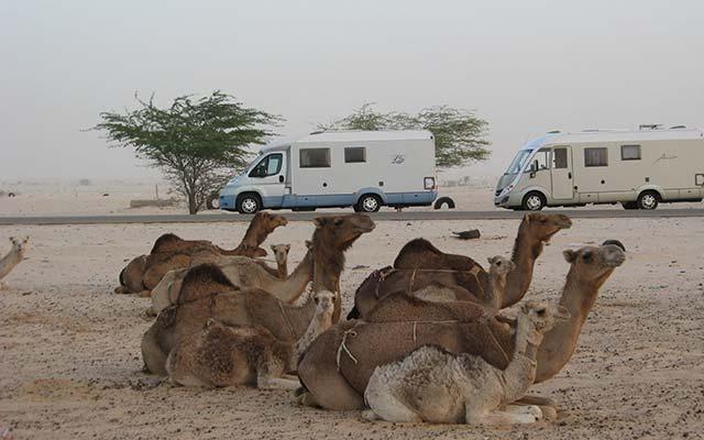 mauritanie aventure en camping car chameau