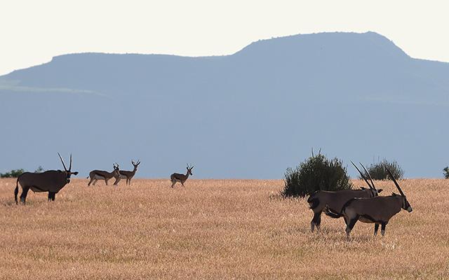 voyage 4x4 namibie découverte désert faune