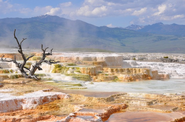 roadtrip aux USA : parc national de yellowstone