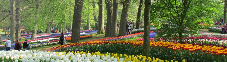 planet-ride-voyage-camping-car-benelux-tulipes-végétation