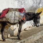 itinéraire maroc en camping car bivouac âne