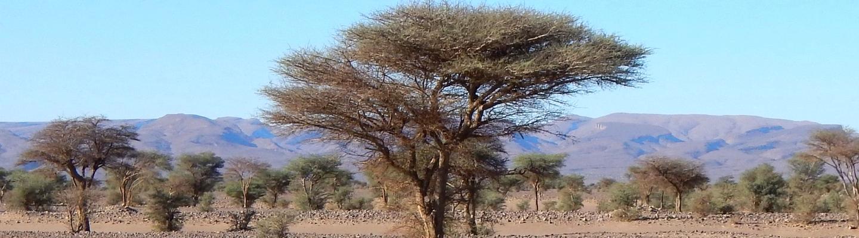 voyage en camping car au maroc desert vegetation