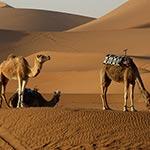 voyage en camping car au maroc