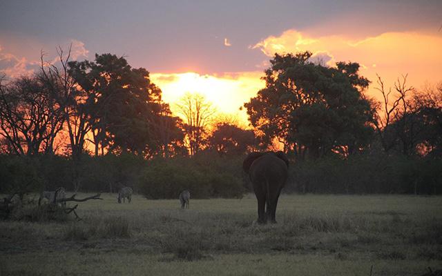safari 4×4 botswana