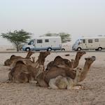 circuit mauritanie en camping car